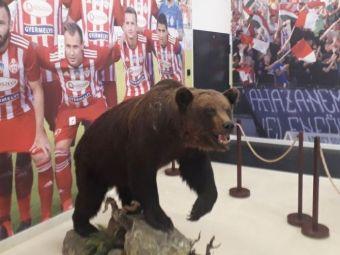 """""""Cu ursu nu-i de joacă!"""" Metoda inedită a lui Sepsi OSK de a-și speria adversarii"""